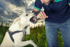 How Much Can You Recover in a Dog Bite Lawsuit